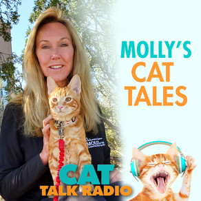 Molly's Cat Tales