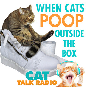 Cat Poo Outside the Box