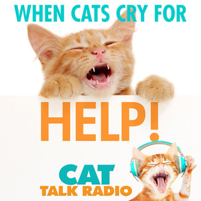 How Cats Cry For Help