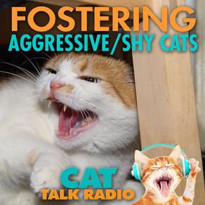 Fostering Aggressive, Shy & Shut Down Cats
