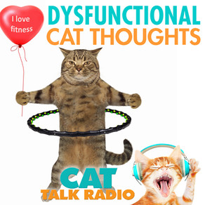 Dysfunctional Beliefs About Cats - How to reframe them