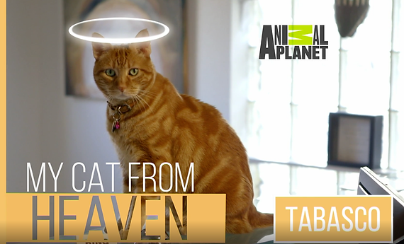 MyCatFromHeavenTabasco.png