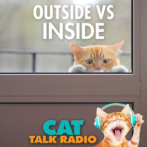 Cats: Outside vs Inside