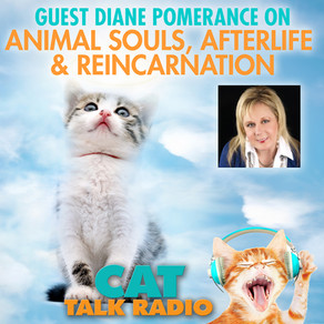Animal Souls, Afterlife & Reincarnation