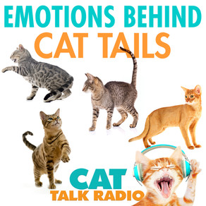 Cat Tails: What Cats Are Saying With Those Flicks and Swishes