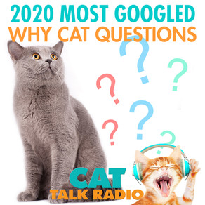 Top 9 WHY Cat Questions Googled in 2020