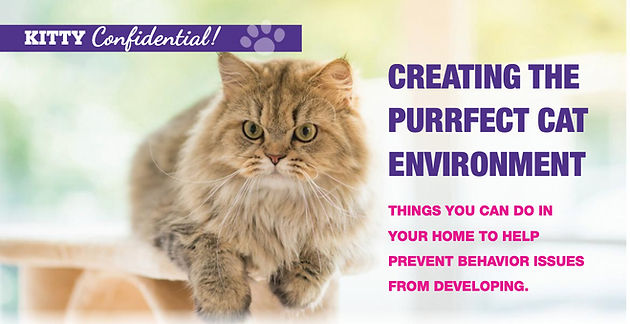 Kitty Confidential Purrfect Environment