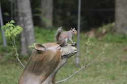 Roller & Squirrel