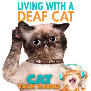 Living With a Deaf Cat