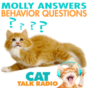 Molly Answers Behavior Questions
