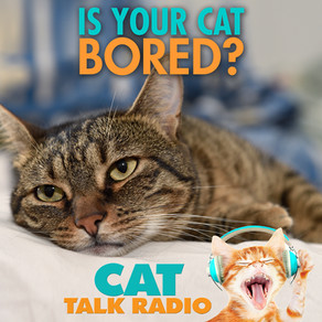 Is Your Cat Bored?