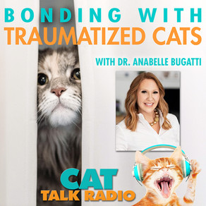Bonding with Traumatized Cats