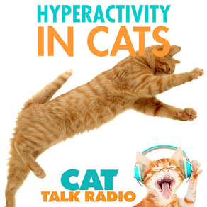 Hyperactivity in Cats