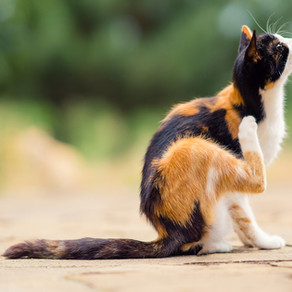 Natural and Effective Flea Repellents and Treatments