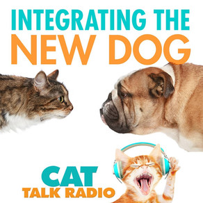The New Dog/Puppy - Integrating canines in a feline household