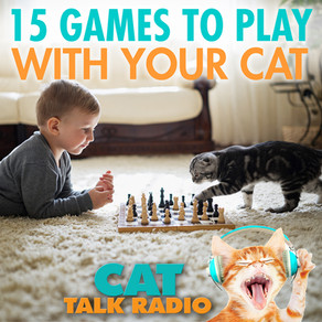 15 Games to Play With Your Cat