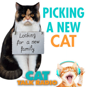 Picking a New Cat