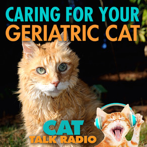 Caring for a Geriatric Cat