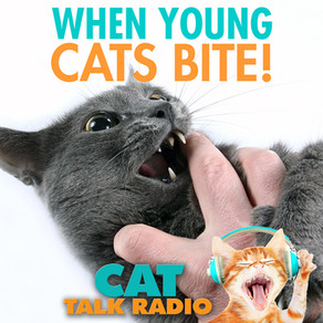 Young Cats Who Bite
