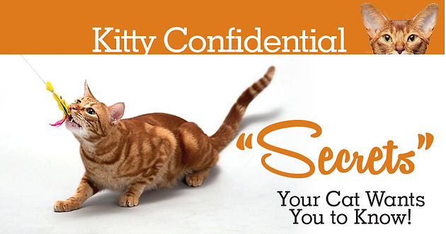 Kitty Confidential - Secrets your cat wants you to know