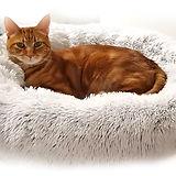 CatBeds.jpg