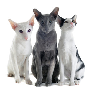 "TRUE OR FALSE? Certain cats are ""alpha"" cats"