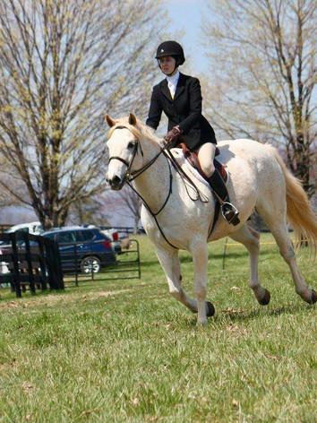 Sponsor a Virginia Riding Horse