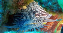 Taodfish