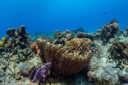 Sea sponger
