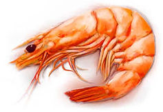 Aqua-Shrimp.jpg