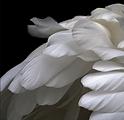 White Angel Wings.png