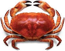 Aqua-Crab.jpg