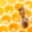 SQ_Classic-HoneyBee.png