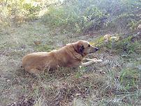 Fleurs de Bach pour le chien Loulou