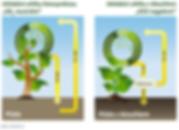třídění odpadu | biouhel CO2