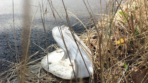 Roušky a respirátory jako ekologická hrozba od blbců