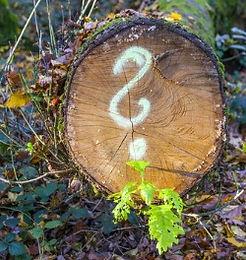 Ilustrační foto dřevo - odpad