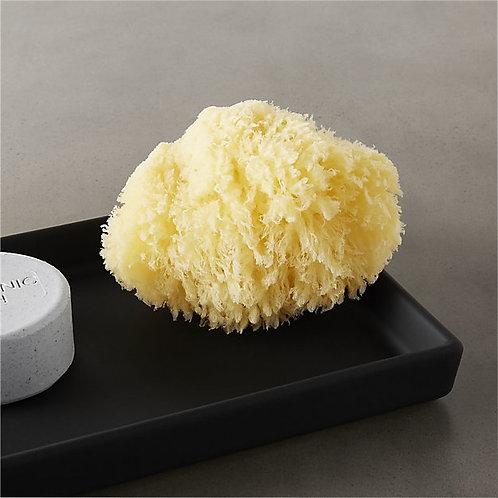 Foam Sea Sponge