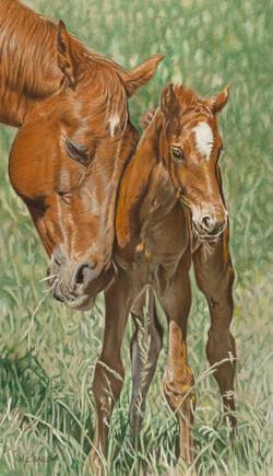 Mustang Mother & Foal