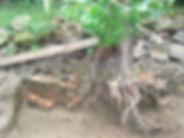 trench 2019 dry.jpg