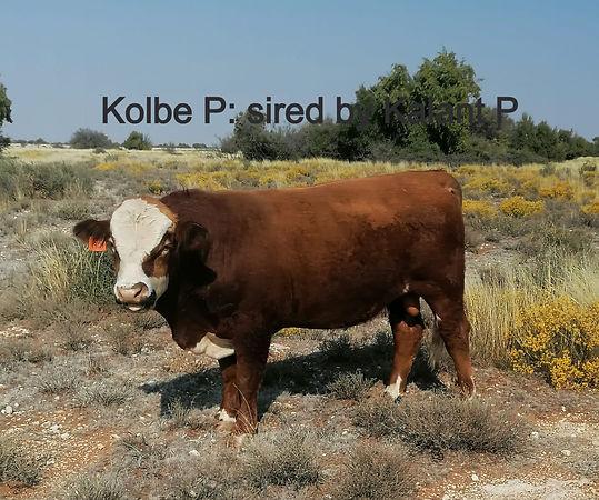 kolbe 11sept_edited.jpg