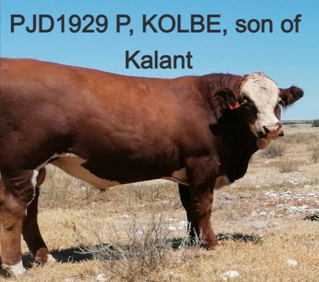 ECONOTECH KOLBE P, PJD1929