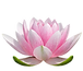 lotus-bluete-noback.png