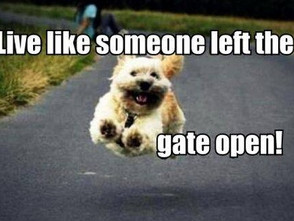 Live as if Someone Left the Gate Open