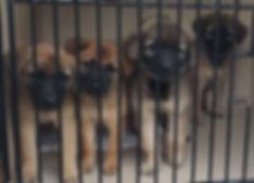 heidis legacy dog rescue