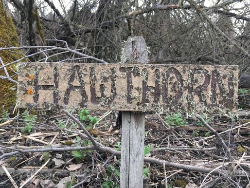 Caught in the Spell of Biotic Community at Rose Creek Preserve