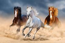 AdobeStock_114734270.jpeg