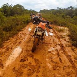 Raizes Rio Amazonas -Tourentex
