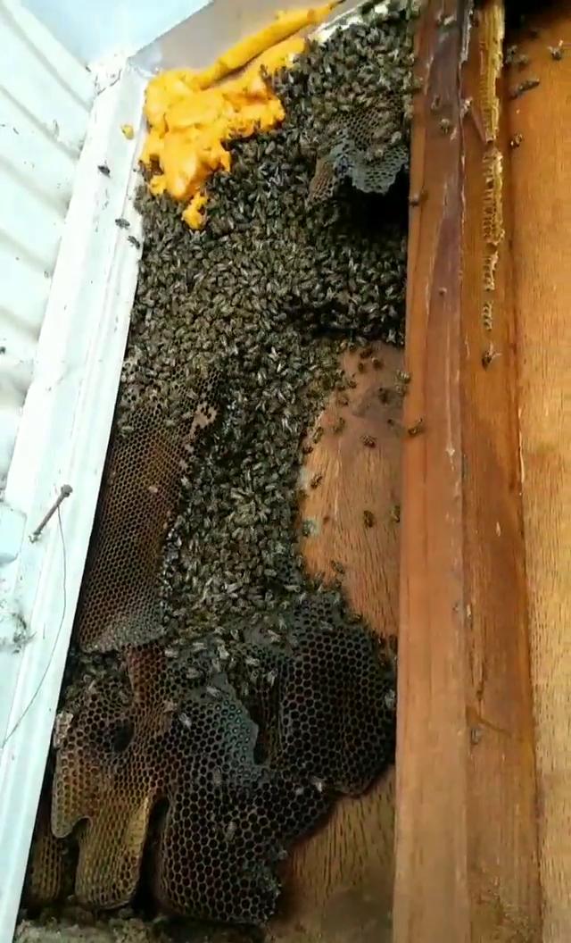 A Hive Removal In Nuevo, Ca