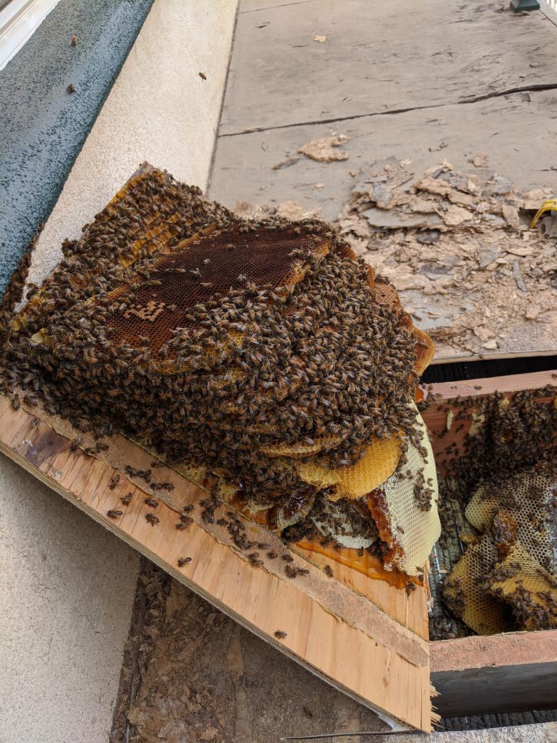 Bees Under A Deck pt. 1